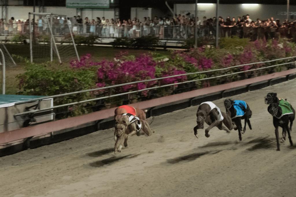 История ставок на собачьи бега